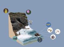 3d model ecosystem cliff Stock Photos