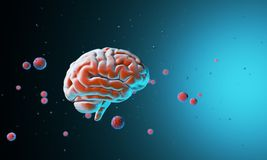 3D model of the human brain. Body. Psychology and thinking. Technological abstraction 3d rendering. 3D render. 3D illustration Royalty Free Stock Photos