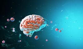3D model of the human brain. Body. Psychology and thinking. Technological abstraction 3d rendering. 3D render. 3D illustration Stock Image