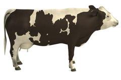 3d model krowa Zdjęcia Royalty Free