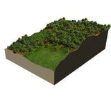 3d model oak forest Stock Image