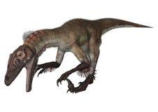 3d nad ścieżką ścinku dinosaur odpłaca się cienia utahraptor biel Fotografia Stock