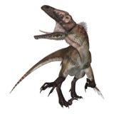 3d nad ścieżką ścinku dinosaur odpłaca się cienia utahraptor biel Zdjęcie Stock
