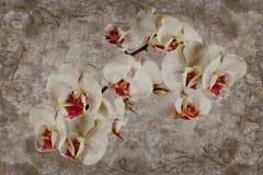 3d o papel de parede, orquídeas floresce em fundo textured do muro de cimento ilustração royalty free