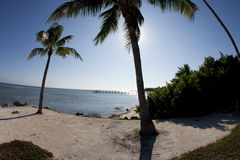 3 d oceanu sceny palma wytopione drzewo Fotografia Royalty Free