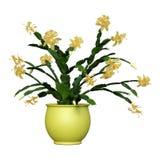 3D Odpłaca się Bożenarodzeniowego kaktusa na bielu fotografia royalty free