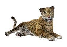 3D Odpłaca się Dużego kota Jaguar na bielu Fotografia Royalty Free