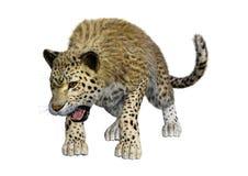 3D Odpłaca się Dużego kota lamparta na bielu Obrazy Stock