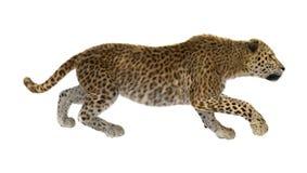 3D Odpłaca się Dużego kota lamparta na bielu Fotografia Royalty Free