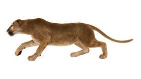 3D Odpłaca się Dużego kota pumy na bielu Obraz Royalty Free