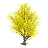 3D Odpłaca się Topolowego drzewa na bielu obrazy royalty free