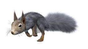 3D Odpłaca się Wschodniej Popielatej wiewiórki na bielu Obrazy Royalty Free