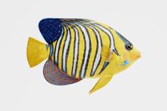 3D Odpłacają się Królewski Angelfish ilustracja wektor