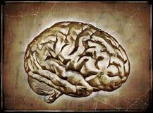 Rocznika mózg ilustracji