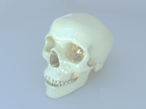3D odpłacają się ludzki scull Fotografia Royalty Free