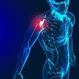 3d odpłacają się medyczny wizerunek z bolesnym ramieniem, łokciem i spi, ilustracji