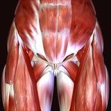 3d odpłacają się przedstawiać mięsień strukturę ciało ludzkie Obrazy Stock