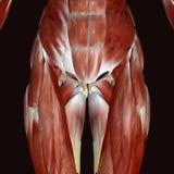 3d odpłacająca się ilustracja - ciało ludzkie anatomia Ilustracji