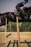 Dżokej jedzie szybkiego thoroughbred konia Zdjęcie Royalty Free