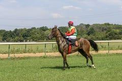 Dżokej w jaskrawym odziewa na podpalanym koniu Fotografia Royalty Free