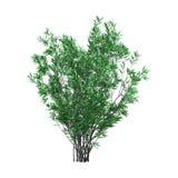 3D Oleandrowy Bush z kwiatami na bielu rendering Obrazy Stock