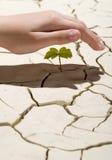 dłonie sprout Fotografia Stock