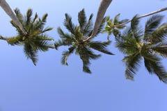 dłonie trzy drzewa Zdjęcia Royalty Free