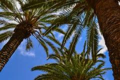dłonie trzy drzewa Fotografia Stock