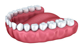 3d open denture isolated Royalty Free Stock Photography