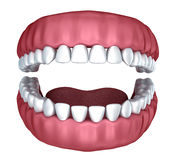 3d open denture isolated Royalty Free Stock Image