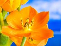 3D oranje bloem, detail Royalty-vrije Stock Afbeeldingen
