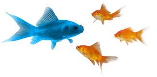 3D Oranje goudvis Stock Fotografie