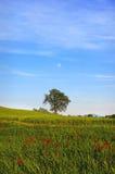 d'Orcia van Val Royalty-vrije Stock Afbeeldingen