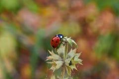 3d ostrza trawy wizerunku ladybird Obrazy Royalty Free