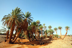 D`Oum Laalag Oasis Stock Photography