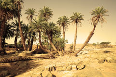 D`Oum Laalag Oasis Stock Images
