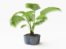 3D Palm Tree in a Flowerpot Stock Photography