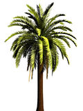 3D Palm tree Stock Photos