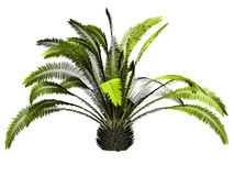 3D Palm tree Royalty Free Stock Image