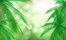 3D palm tree leaves against a defocussed background. 3D render of palm tree leaves against a defocussed background Stock Photography