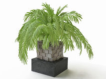 3D Palm Tree Royalty Free Stock Images