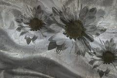 3d papel pintado, manzanillas en fondo texturizado muro de cemento El efecto del fresco, efecto de seda Rebecca 36 libre illustration