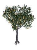 3D perzikboom - geef terug Stock Afbeelding