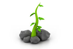 3d plant with stones Royalty Free Stock Image