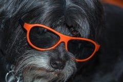 Hond met 3d glazen Stock Afbeeldingen