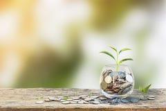 3 d pojęcia pojedynczy utylizacji inwestycji Wzrostowa roślina na monetach w jasnej szklanej butelce Zdjęcie Stock