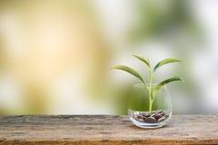 3 d pojęcia pojedynczy utylizacji inwestycji Wzrostowa roślina na monetach w jasnej szklanej butelce Fotografia Royalty Free