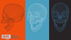 3D polygonal vector wireframe graphic skull in various view Royalty Free Stock Image