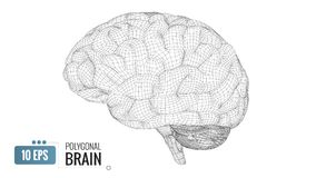 3D polygonal wireframe brain on white BG royalty free stock image