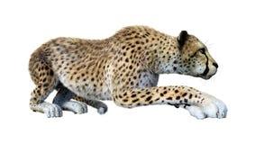 3D que rende Cat Cheetah grande no branco ilustração royalty free